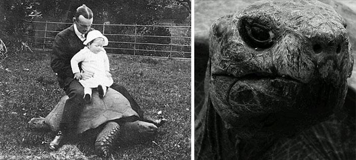 182-year-old-tortoise-jonathan-17 (1)