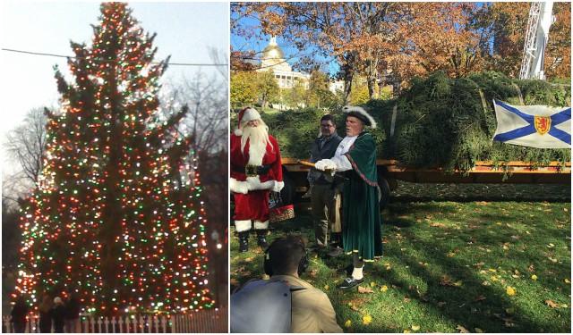 The citizens of Nova Scotia, Canada, annually donate a Christmas tree to the citizens of Boston as a token of gratitude