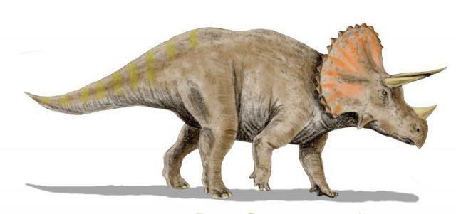 triceratops_bw-640x301.jpg