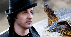 Rocky turtles