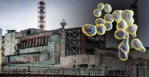 Chernobyl fungi
