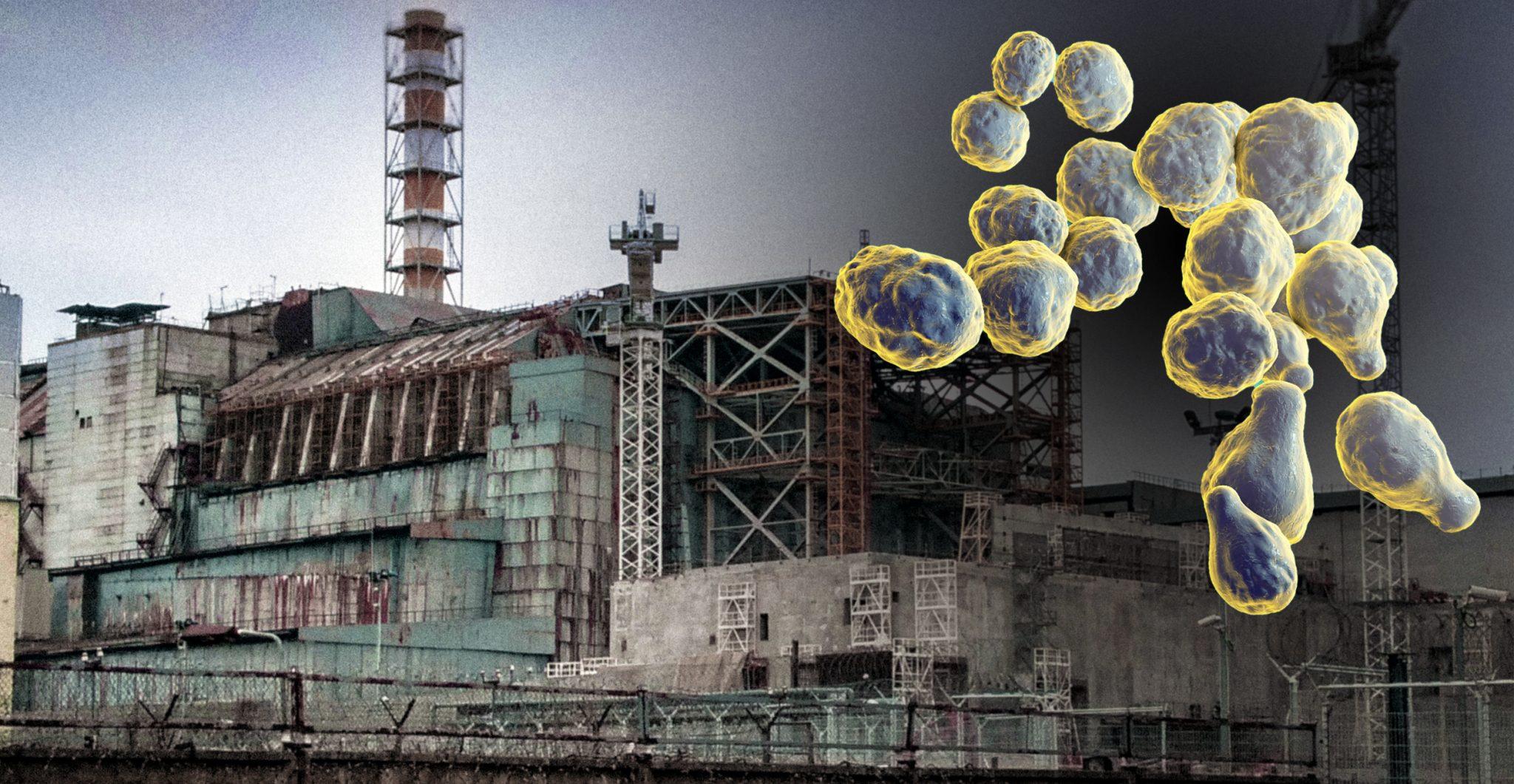Fungi on Chernobyl