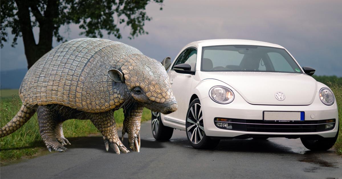 An armadillo big as a beetle!