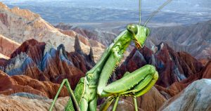 Mantis petroglyph