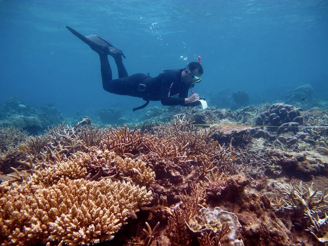 scientific diver on coral reefs in Karimunjawa NP