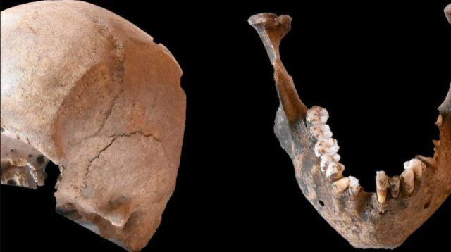 Skull and jawbone found at Stabiae